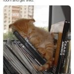 A cat sleeping among the books