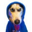 Profile picture of HoodieDog
